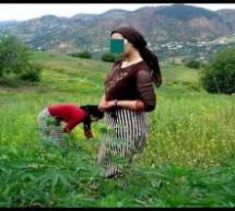 المغرب يصوت لصالح إزالة القنب الهندي من المخدرات الأكثر خطورة بالأمم المتحدة