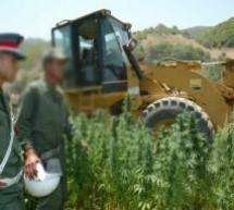 سابقة..مشروع قانون تقنين زراعة الكيف على طاولة مجلس الحكومة ..وهذا أهم ما جاء فيه