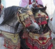 تنظيم الدورة 27 لمهرجان الفروسية بتيسة إقليم تاونات