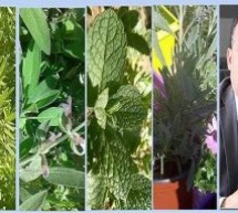 فرحات مدير وكالة وطنية متخصصة بتاونات:المغرب يحتل المرتبة الثانية عالميا بحوالي 4200 صنف من النباتات الطبية والعطرية