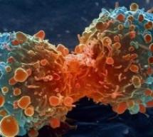 علماء روس يتمكنون من اكتشاف فيروس يقضي على السرطان