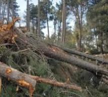 اقتُلِعت الأشجار وتجمدت مياه الصنابير.. عاصفة ثلجية ترعب سكان جماعة الودكة بتاونات